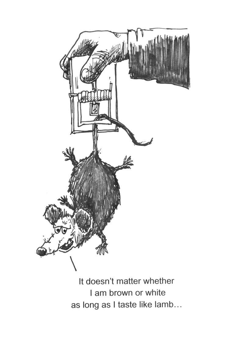 Rat proverb